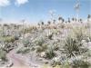 kaktus5