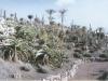 kaktus6