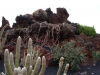 kaktus16