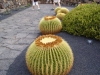 kaktus18